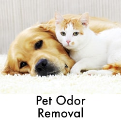 Pet Odor Removal width=